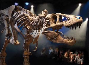T-rex resized